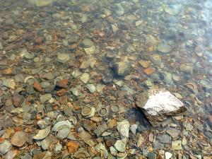 里杜湖窑址陶瓷碎片